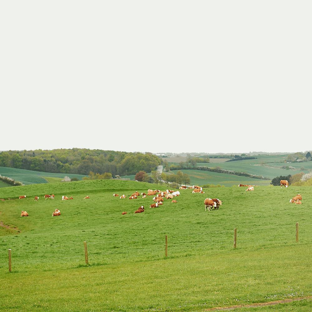 Holbæk Kommune